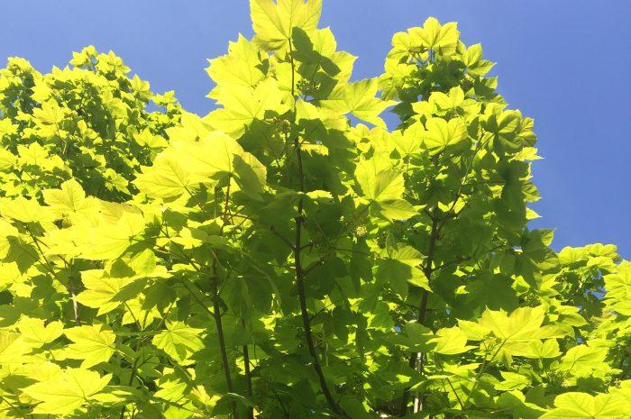 Bomen Leidsebuurt